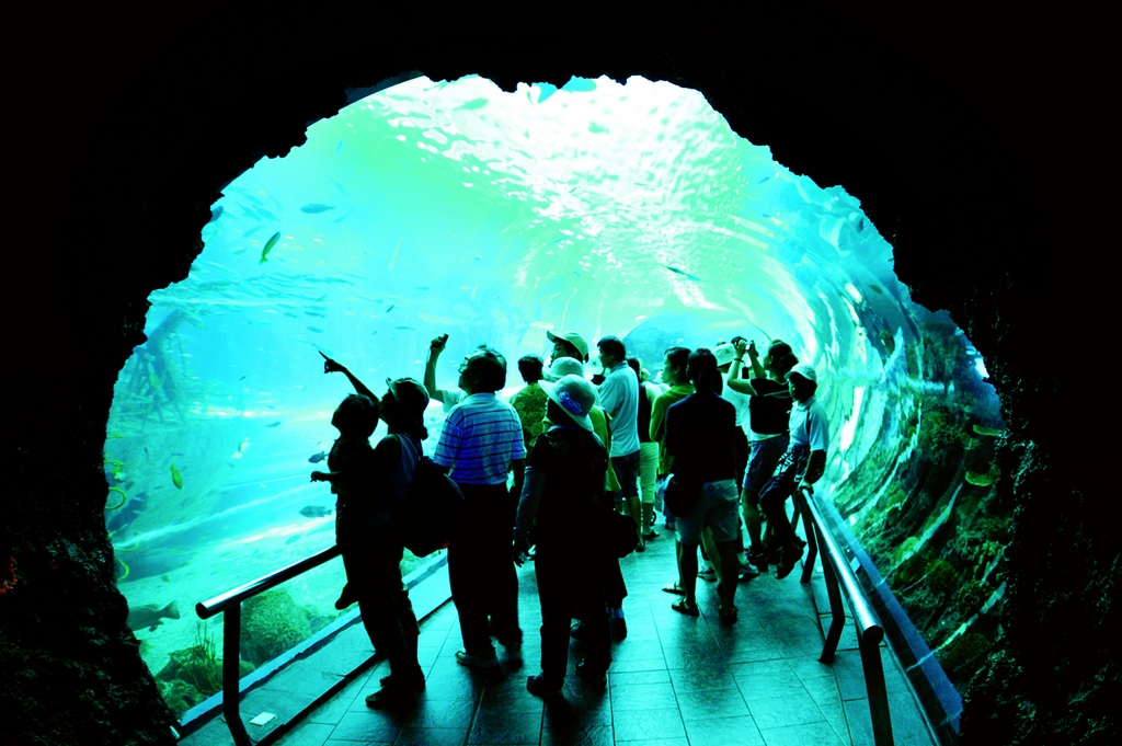 极幽深,极冷冽的海洋生态主题;其中世界最高单面10米压克力玻璃的巨藻