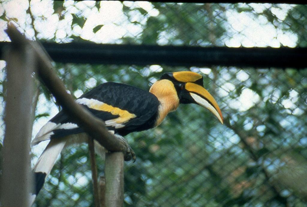 壁纸 动物 鸟 鸟类 雀 1024_691