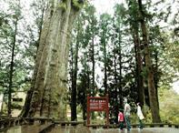 阿里山地區國家森林步道健行二日遊