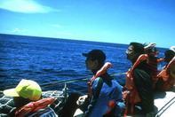 東部海岸賞鯨一日遊-台東