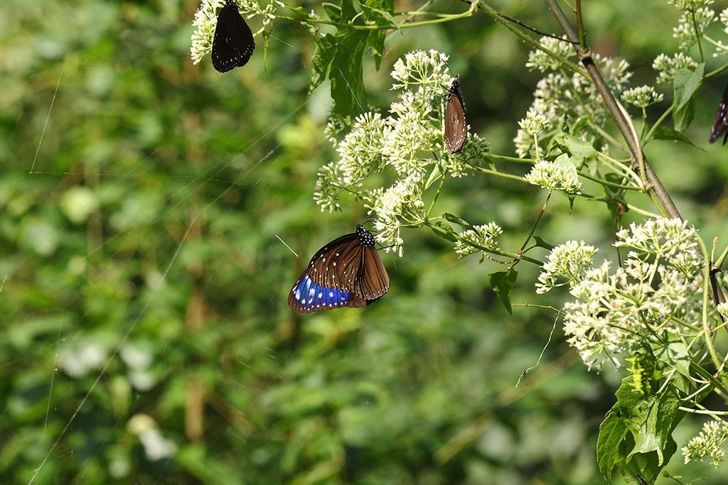 Biennial Butterfly Beauty Festival